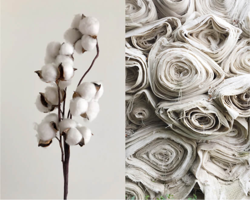 Cotton on stem and rolled fabric